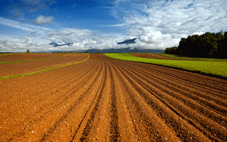 tilled agriculture field