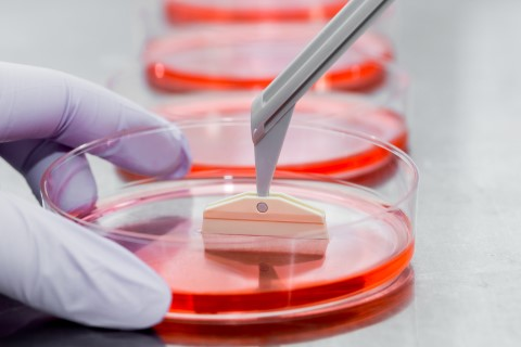 A scientist harvesting cells from a Petri dish.